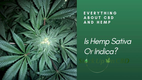 Is Hemp Sativa Or Indica?