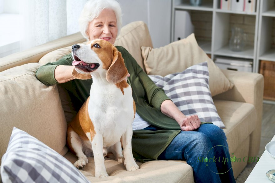 Cannabis As A Potent Medicine For Pets