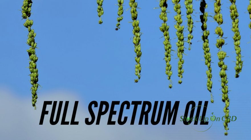 Full Spectrum Oil Is The Hidden Medicinal Treasure. Here Is How?