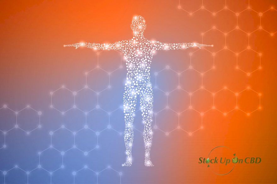 HOW DOES CBD OIL WORK IN THE BODY?