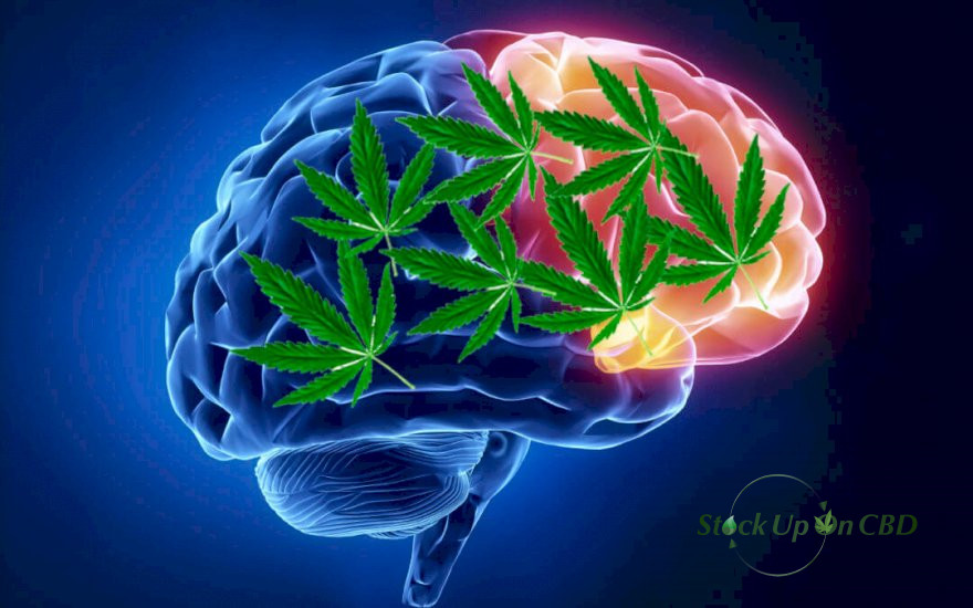 how does cbd affect your brain?